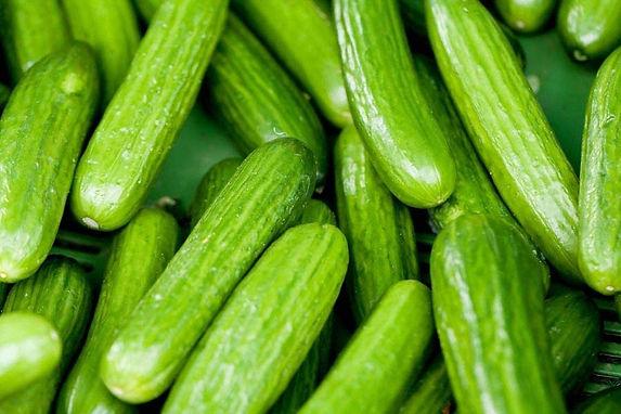 persiancucumber.jpg