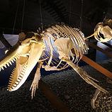 husavik-waalvis-museum.jpg