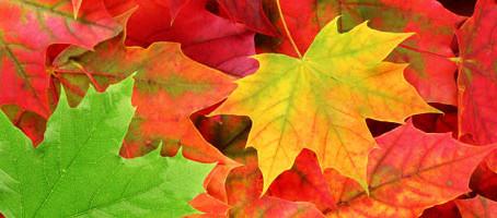 Fit durch Herbst und Winter