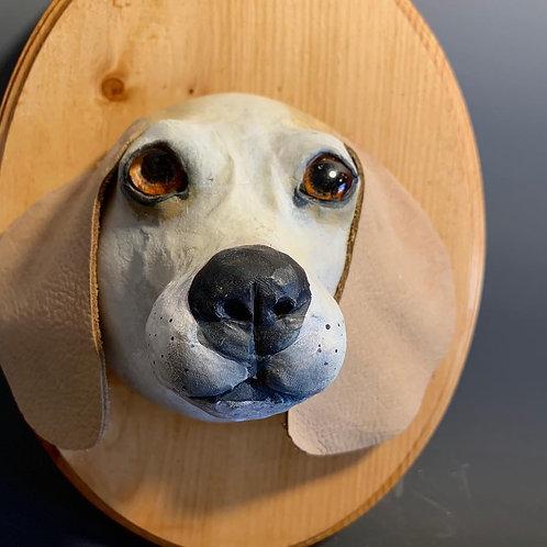 Beagel Dogs