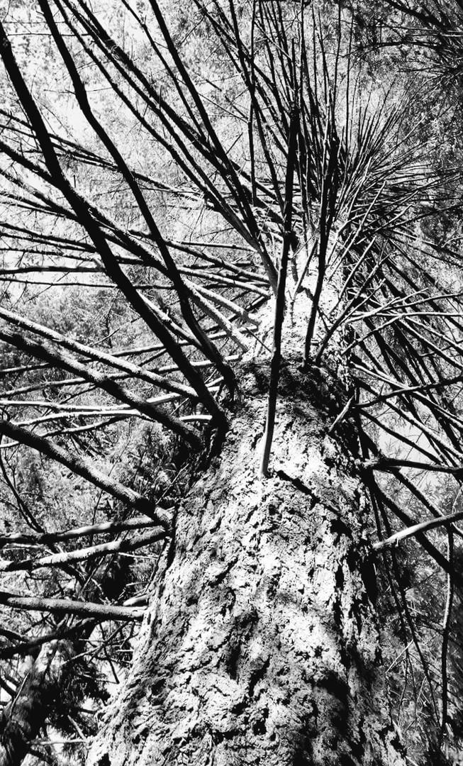 B&W Branches - Kathy Hall.jpg
