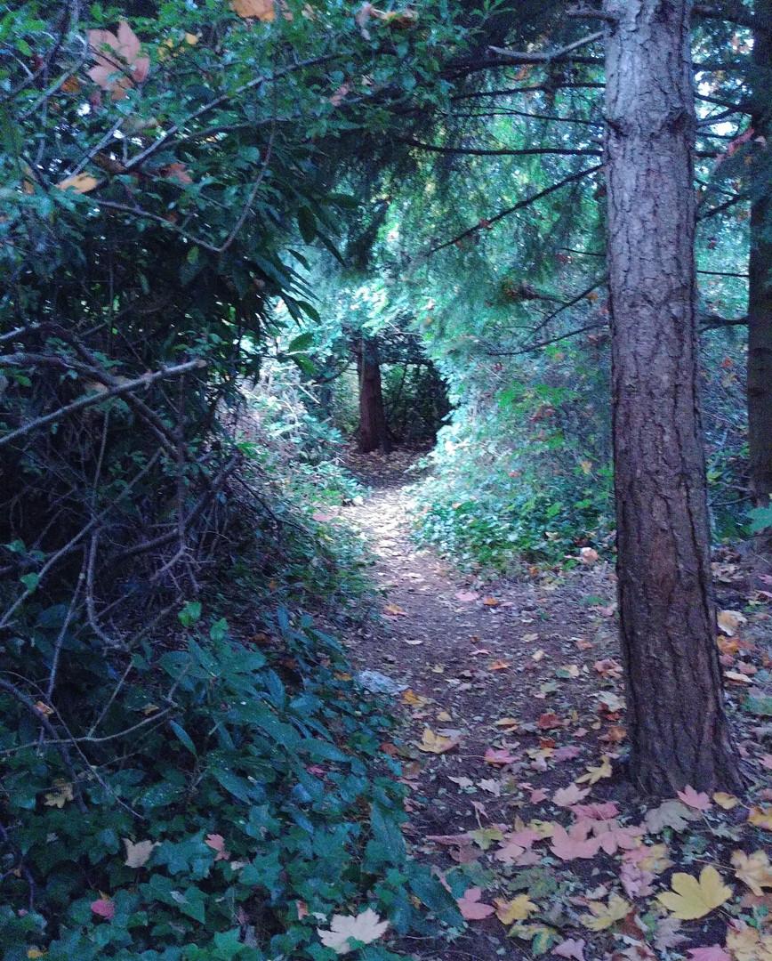 On the Hoy Creek Trail - Michelle Bogdan