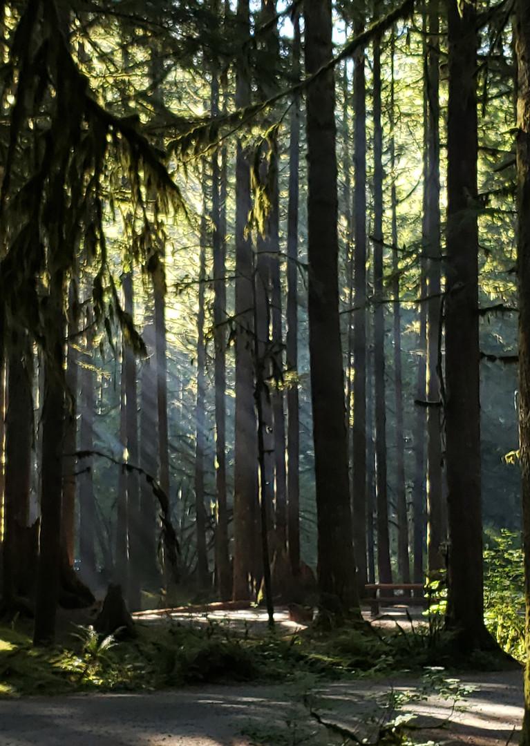 Camping Light - Kathy Hall.jpg