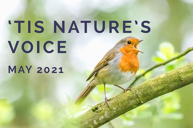 naturesvoicebanner2_edited.jpg