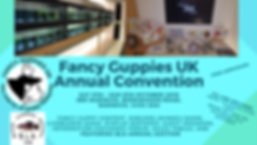 Fancy Guppies UK Annual Convention 2019