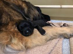 Tia & Puppy