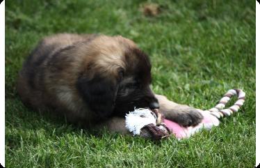 Puppy & Toy