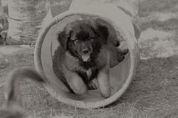 Puppy in Tunel