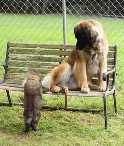 Hailie & Puppy