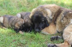 Luna & Puppies