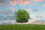 SRA Environmental Software