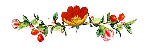 background,persianlily,swati,watwani,hom