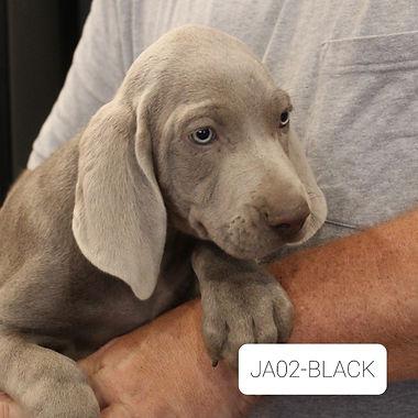 JA02-Black.jpg