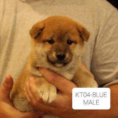 KT04-Blue.jpg