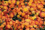 rosen_low_resolution.jpg
