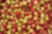 äpfel_low_resolution.jpg