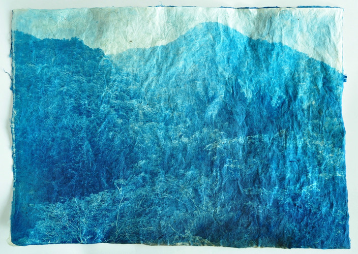 """Authentic exploration. """"Stillness in the Woods"""" ある森の静寂  Cyanotype Print on handmade Gampi Paper  H420mm×W594mm/H16.54inch×W23.39inch"""