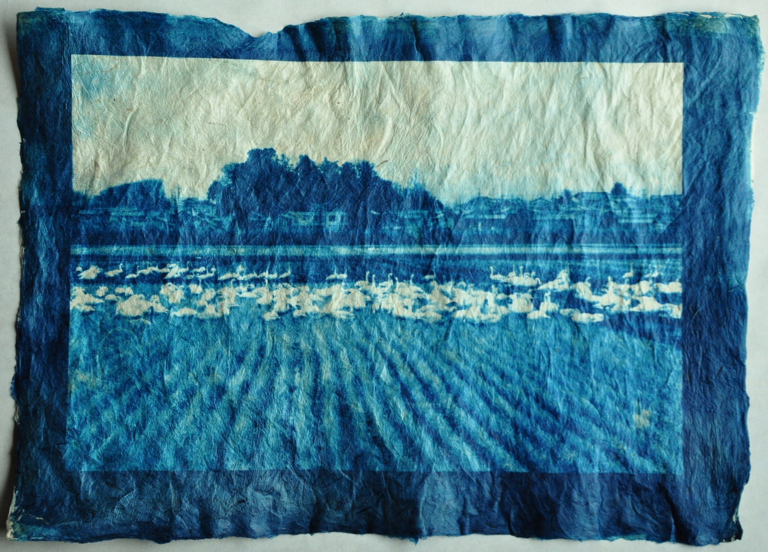 """Tranquil Water"" 穏やかな水面 Cyanotype Print on handmade Gampi Paper  H297×W420mm/H11.69×W16.54in  Edition 5/10"