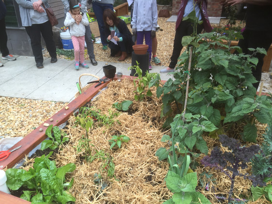 Fruit and veggie monthly swap and social gardening