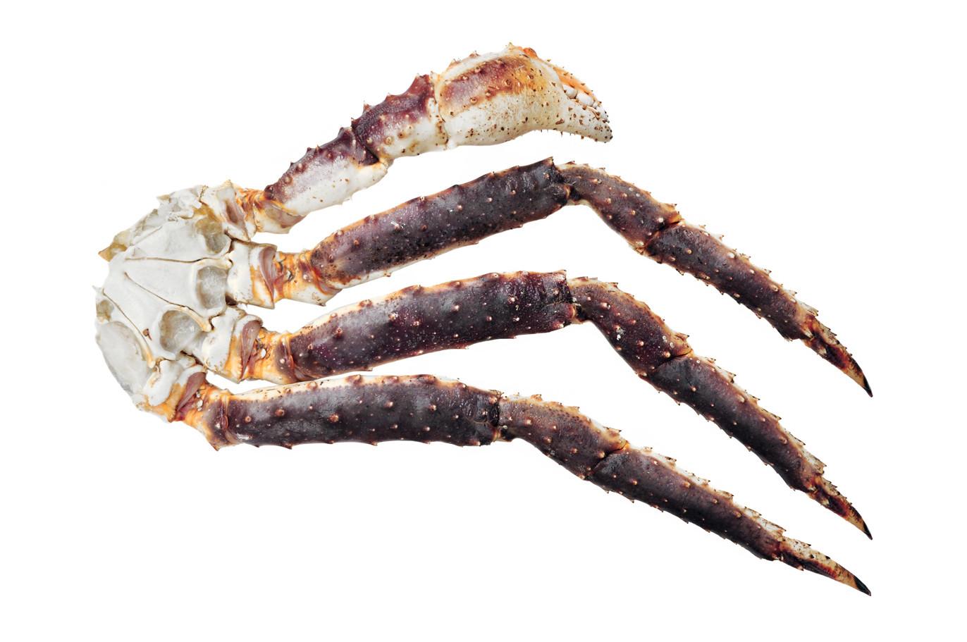 Crabe Royal_3.jpg