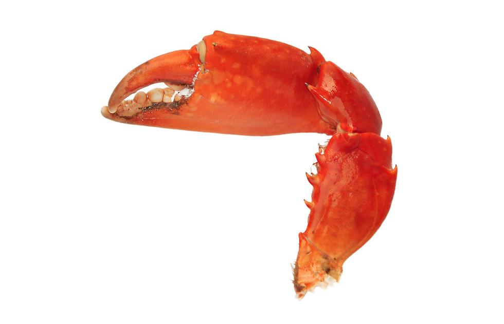 Crabe_Madagascar_pince_3.jpg