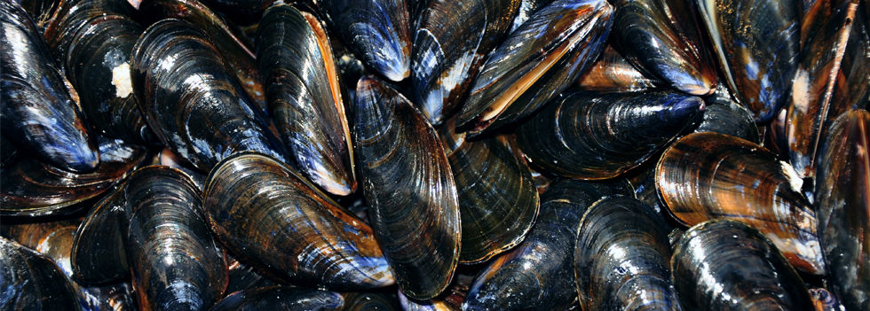 COQUILLAGES_moules.jpg