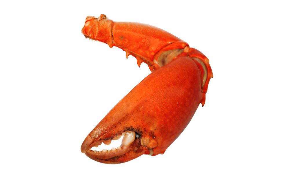Crabe_Madagascar_pince_1.jpg