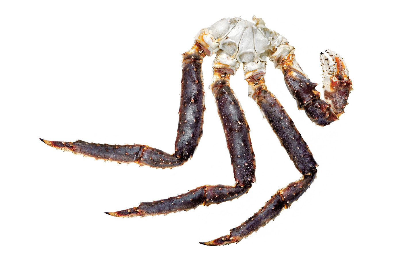 Crabe Royal_cru.jpg