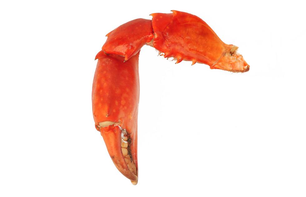 Crabe_Madagascar_pince_2.jpg