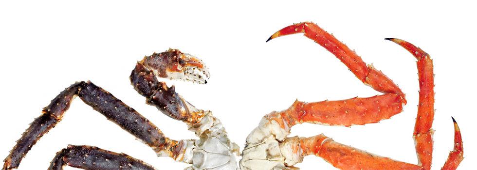 CRUSTACES_Crabe Royal.jpg