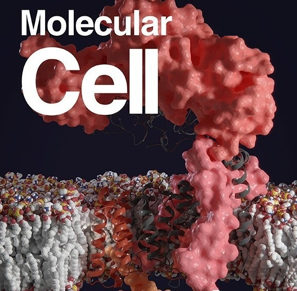 Structural Basis for Telomerase RNA Recognition and RNP Assembly by the Holoenzyme La Family Protein p65