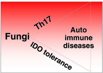 The Role of Fungi in Autoimmune Disease