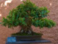 Bonsai-Museum-Almunecar-42.jpg