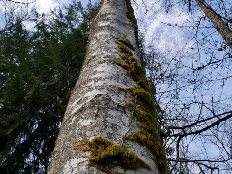 Lessons from the Alder