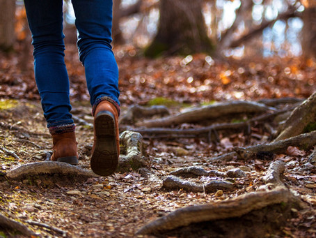 How a Walk in the Woods Can Change Your Mind