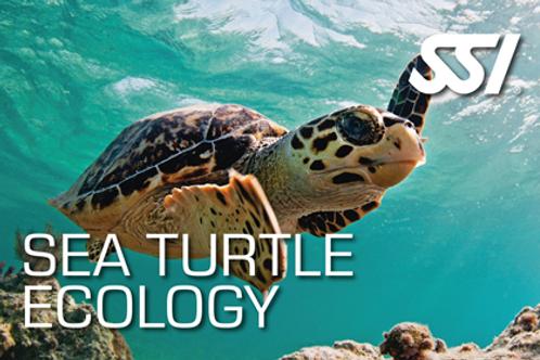 Sea Turtle Ecology