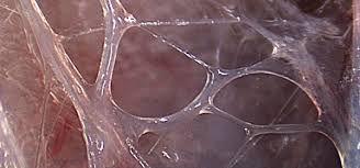 Fluid fascia 2.jpg