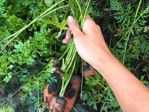 Ha eddig úgy tudtad, növényekből elegendő A-vitaminhoz jutsz…