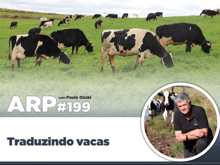 ARP#199 - Traduzindo vacas