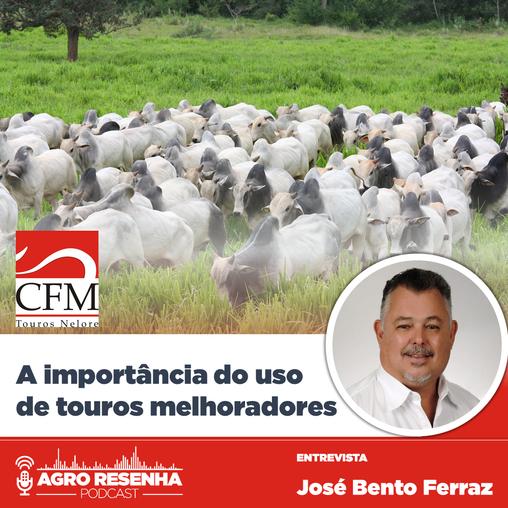 A importância do uso de touros melhoradores