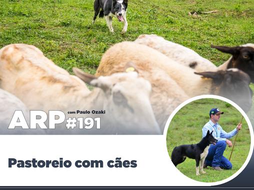 ARP#191 - Pastoreio com cães
