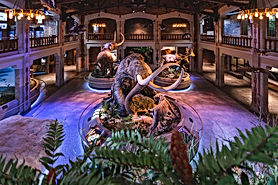 ProMedica Museum of Natural History (Toledo Zoo)
