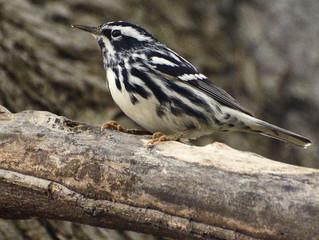 Birdwatching Hookey