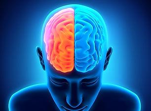 bigstock_human_brain_anatomy_63942259.jp