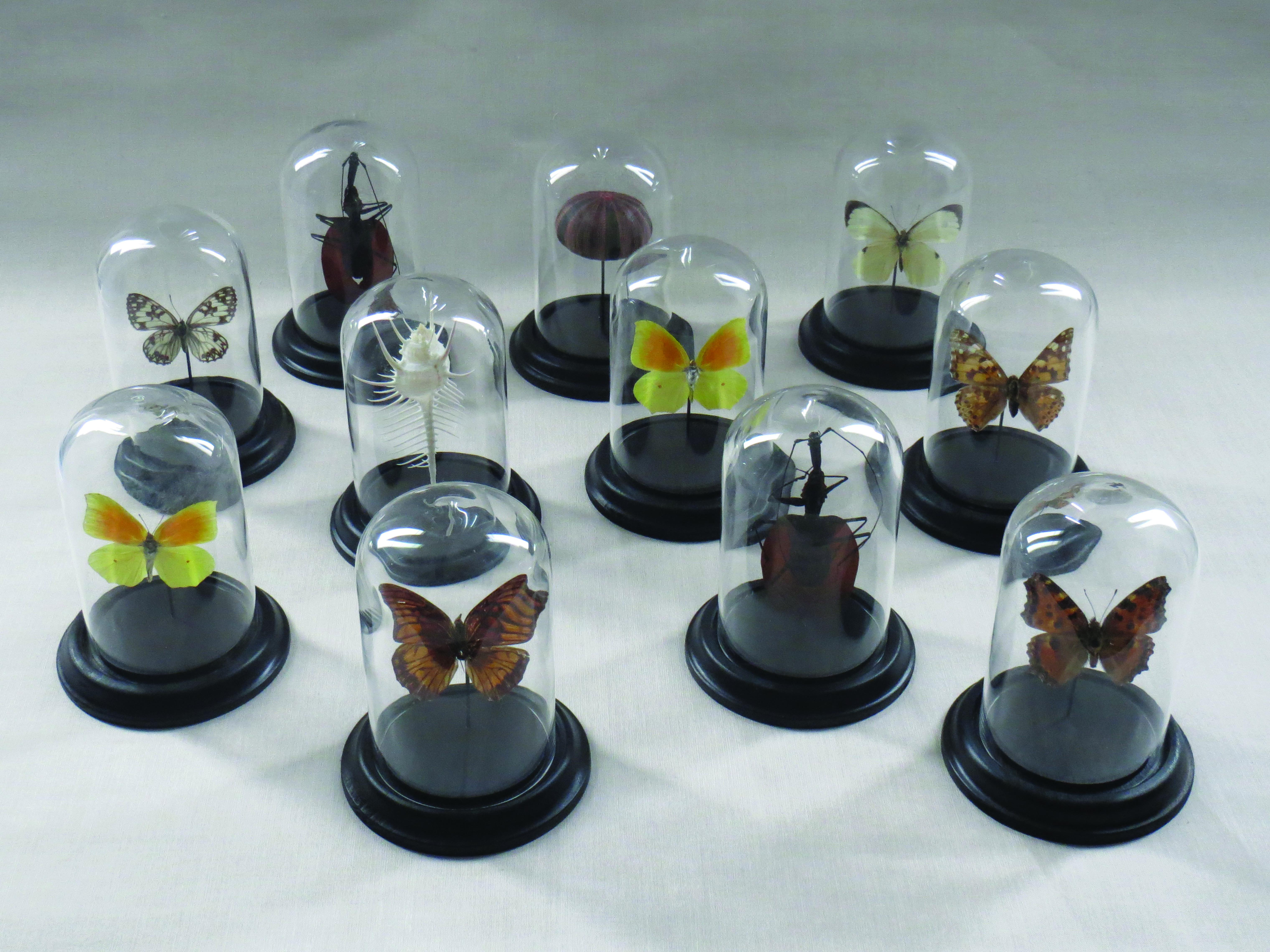 Ensemble d'espèces entomologiques
