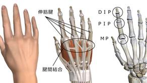 トレーニング集:薬指&小指の強化