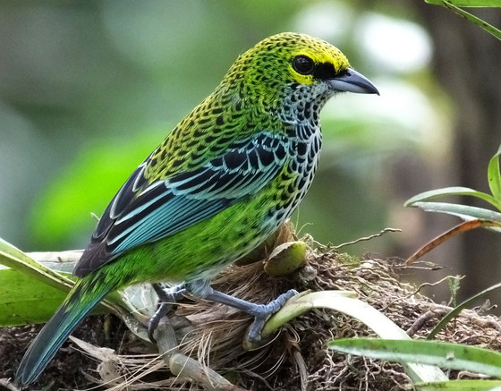 The Dos and Don'ts of Planning a Birding Trip to Costa Rica