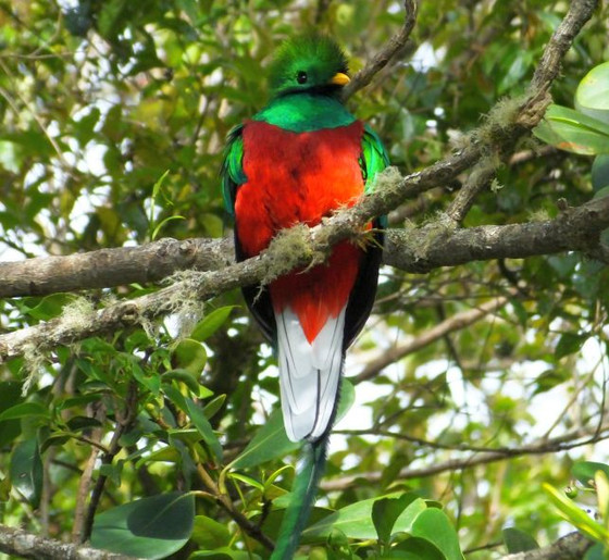 The Best Sites in Costa Rica to Photograph Resplendent Quetzal