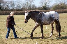 Desensitisation Techniques, Horse Training