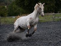 Equine Behaviour UK